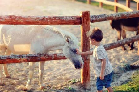op een boerderij de jongen in jeans met witte een pony maakt kennis Stockfoto