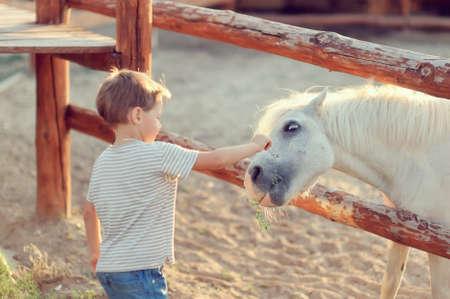 carreras de caballos: en una granja del muchacho en pantalones vaqueros con un caballo blanco se familiariza