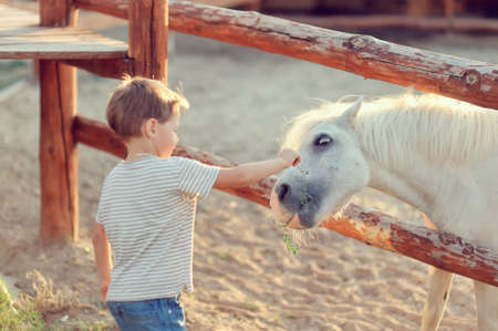 on a farm the boy in jeans with white a pony gets acquainted photo