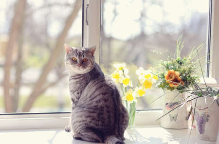 cat sitting on the windowsill in the flowers on the background of the window photo