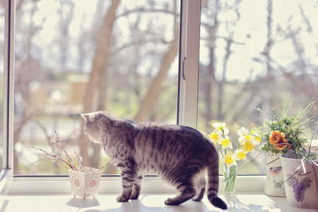 cat walk among the flowers on the windowsill looking out the window photo