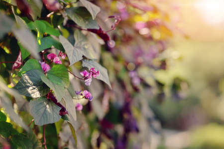 Beautiful Flower Bushes and Trees in a Sunny Garden Landscape Stock Photo - 15304922