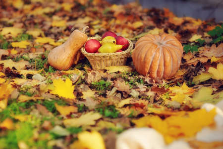 on the green grass is a fruit basket and a pumpkin Stock Photo - 16904509