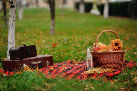picnic on a blanket, fruit basket and bags photo