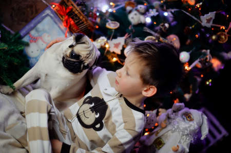 The boy in a night suit under an elegant fur-tree with a pug photo