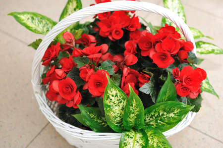 Beautifully issued bouquet from red flowers in the big basket Stock Photo - 17355109
