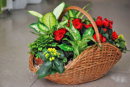 Beautifully issued bouquet from white and red flowers in the big basket Stock Photo - 17355108