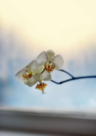 close-up of a branch with beautiful white flowers Stock Photo - 17780252