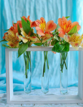 on the window sill with a blue curtain orange spring flowers in a vase photo