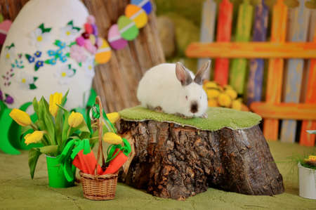 collocation: Easter composition with eggs and rabbit on grass