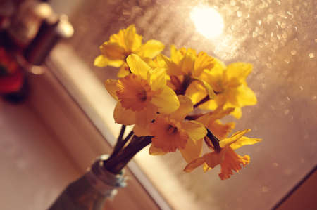 against the wet glass window is a vase of yellow daffodils photo