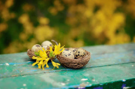 on a wooden bench two nests with quail eggs and yellow flower photo