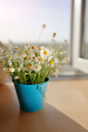 against the background of an open window in a blue bucket bouquet of wild daisies photo