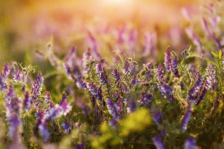 in the rays of sunlight field of beautiful wildflowers photo
