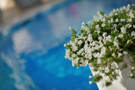 the azure blue pool water on the background of beautiful flowers of petunia photo