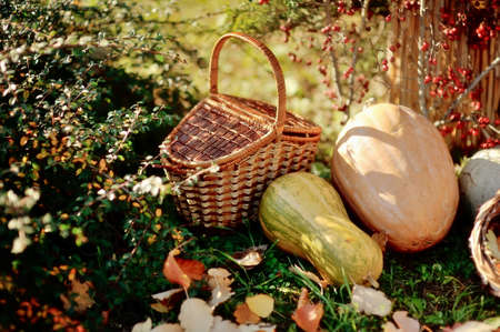 large pumpkin: on the grass with foliage wicker basket, a large pumpkin and berry bush with crane Stock Photo
