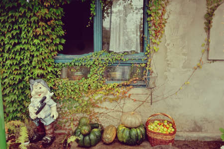 the wall of an old house with a window and ivy is leprechaun with a pumpkin and a basket with apples photo