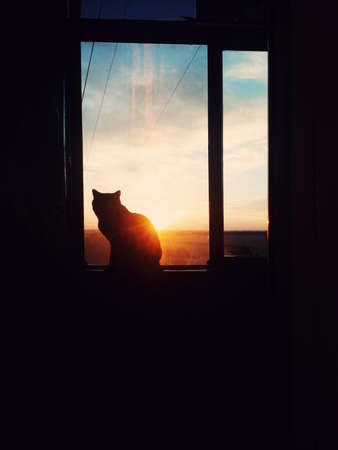 dark room in the silhouette of a cat sitting on a sunset Standard-Bild