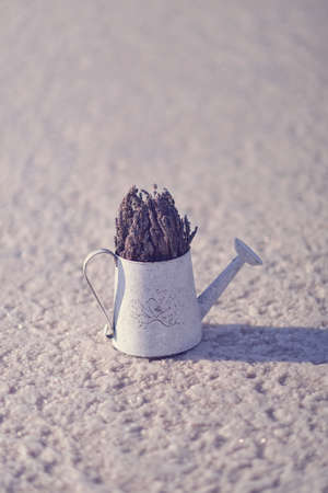 salt on the surface of standing watering can with a bouquet of lavender photo