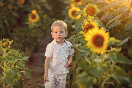 little boy with blond hair standing on the field among large sunflowers photo