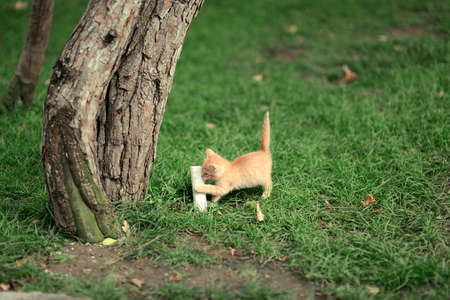 in the park near the tree on a green grass game Little red kitten photo