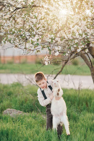 grass beautiful: in a lush garden in the sun cute young boy playing with a little white goat