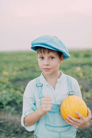melon field: on melon field boy in jeans and a blue cap collects ripe melon