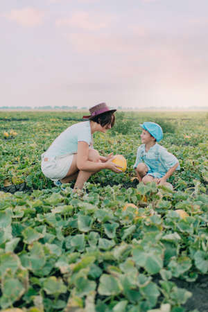 harvest field: on the field with melons mother and son wearing a hat in the cap harvest