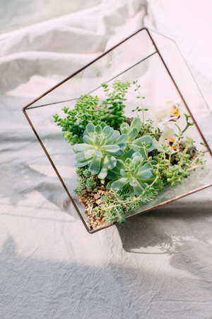 face in tree bark: The compositions of succulents in a square aquarium on a white background in the sun Stock Photo