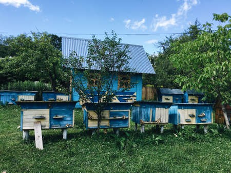 against the blue sky and the blue wooden house apiary in the green forest Stok Fotoğraf