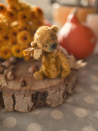 raggedy: the window on the wooden deck sits toy teddy bear and autumn foliage