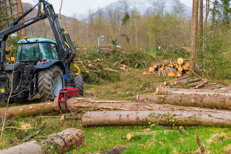 Harvesting of trunks with a mechanical arm in a forest. Crane to grab cut logs