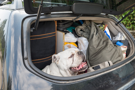 Concept of no abandonment of animals and of correct behavior during the summer holidays. Dog in the car, with lots of luggage, leaving for the summer holidays Zdjęcie Seryjne