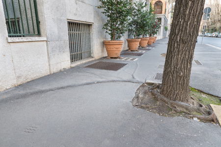 Urban problem with tree roots. Sidewalk in the city of Milan, Italy, dangerous for pedestrians, especially children and elderly, danger present in different streets of the city