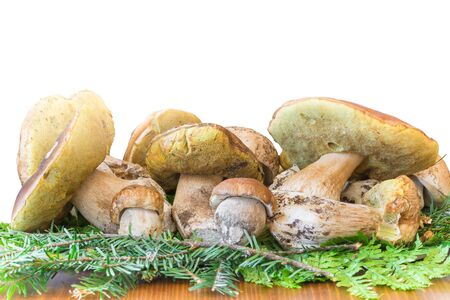 Group of fresh mushrooms Boletus edulis, excellent edible mushrooms known by different common names like cep, cepe, penny bun, porcini Zdjęcie Seryjne