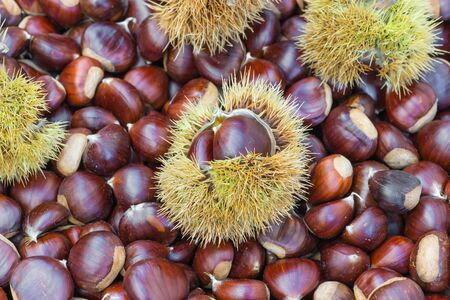 Chestnuts and chestnut burs. European species, sweet chestnut (Castanea sativa) Stockfoto