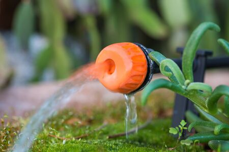 Micro drip irrigation system. Close up of an adjustable drip head in a plant pot. Home gardening Reklamní fotografie