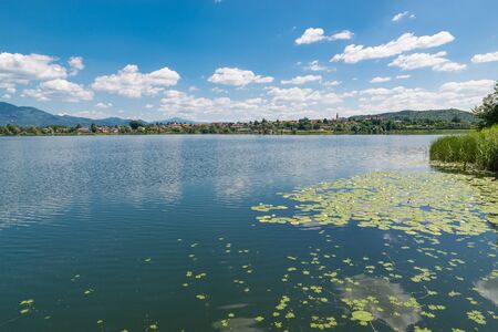 Typical vegetation of a European lake with water lily aquatic plants. Nice lake in northern Italy. Lake Comabbio, with the town of Varano Borghi in the background