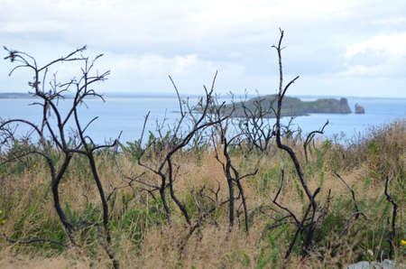 Dried Trees by the Sea Coast in Howth, Ireland