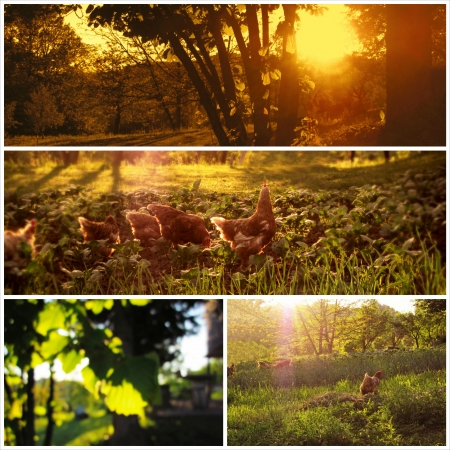 natureal: Beautiful countryside collage images Stock Photo