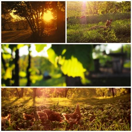 natureal: Bella campagna immagini collage