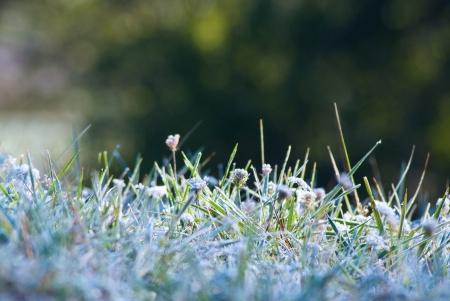 Morning frost on the grass at autumn seasone