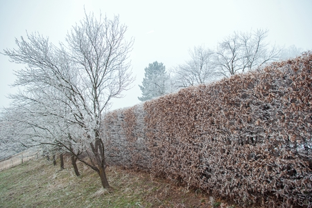 cold weather: beautiful plant covered with snowflakes at winter seasone Stock Photo