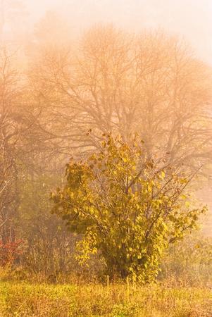 sunlight sky: Magic golden early morning nautre scene at autumn fall season rural area Stock Photo