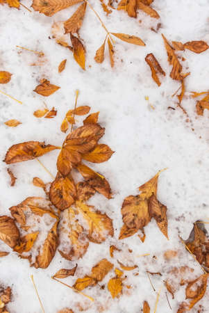seson: Fallen foliage on the snowy ground at fall winter seson cold beautiful day Stock Photo