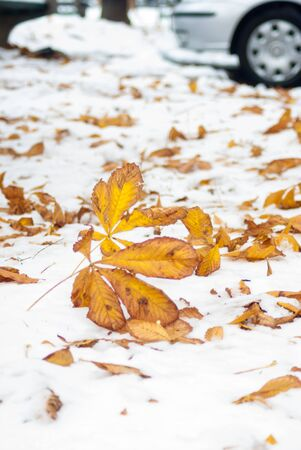 snow ground: Foliage on the snow ground at autumn fall winter season Stock Photo