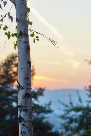 White Birch tree with beautiful sunshine teal orange sky landscape. Standard-Bild - 121351363