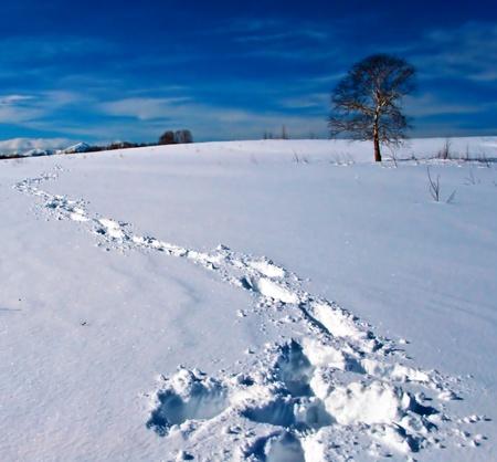 Traces on snow  Stock Photo