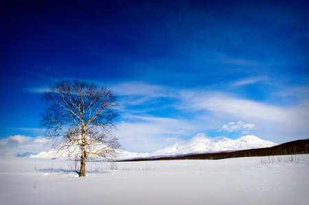 Winter landscape with a beautiful tree(11).jpg Stock Photo