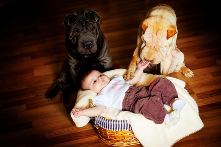 keeps: The baby with a dog Stock Photo